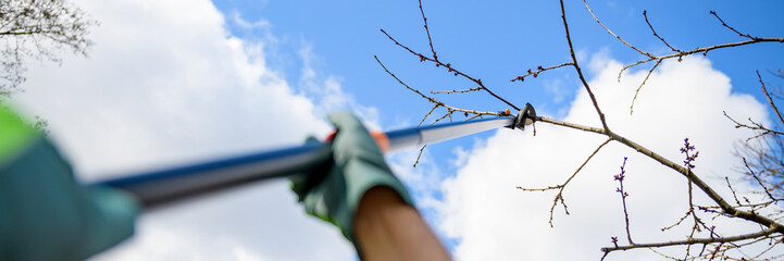 Unrecognizable man pruning fruit trees in his garden. Male gardener using telescopic pruning shears. Springtime gardening web banner.