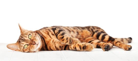 Spoed Fotobehang Kat Bengal cat