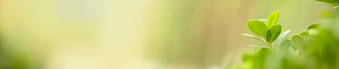 Foto op Aluminium Natuur Close up beautiful nature view green leaf on blurred greenery background under sunlight with bokeh and copy space using as background natural plants landscape, ecology cover concept.