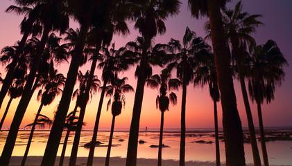 Wall Mural - Palmen an der Strandlagune zum Sonnenaufgang