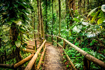 wooden path in rainforest tropical jungle background
