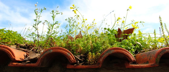diverse plants on the roof of tiles, nature always wins Wall mural