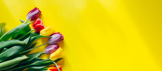Poster Bloemen beautiful multi-colored tulips on a yellow background, top view, flowers in the corner of photo, long banner.
