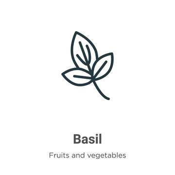 Basil outline vector icon. Thin line black basil icon, flat vector simple element illustration from editable fruits and vegetables concept isolated stroke on white background