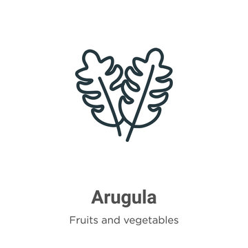 Arugula outline vector icon. Thin line black arugula icon, flat vector simple element illustration from editable fruits and vegetables concept isolated stroke on white background
