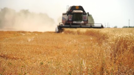 Wall Mural - Blurred сombine harvester for harvesting wheat. Slow motion