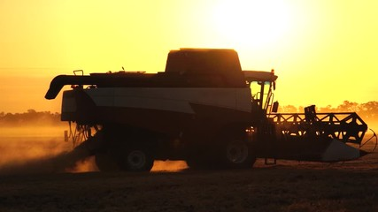 Wall Mural - Combine harvester harvests wheat at sunset. Slow motion