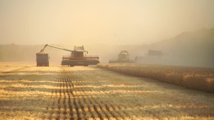 Wall Mural - Harvesting of wheat. Combine harvesters at work.