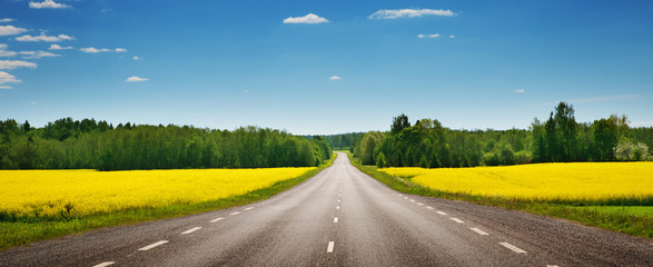 Wall Mural - Road panorama on sunny summer day in countryside