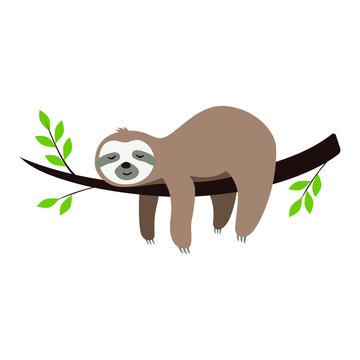 Cute cartoon sloth sleeping on a branch
