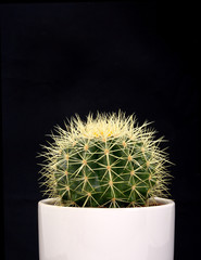 Close-up of cactus with thorns on black background