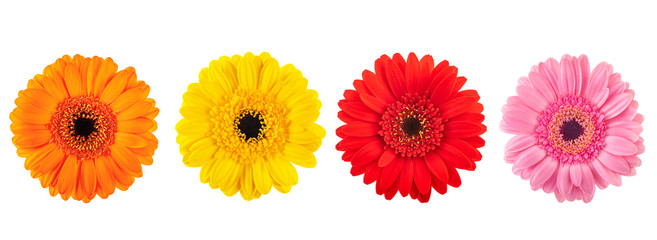 Photo sur Plexiglas Gerbera Gerberas flowers