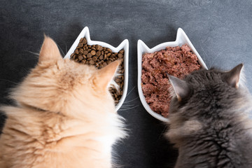 top view of two cats eating wet and dry pet food from ceramic feeding dish Papier Peint