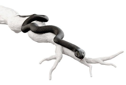 Black Snake on Dry Tree Branch isolated on White Background. 3D illustration