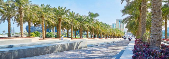 Photo sur Aluminium Palmier Museum Park, Doha, Qatar