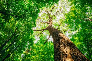 Fotobehang Bossen a spring forest trees. nature green wood sunlight backgrounds.