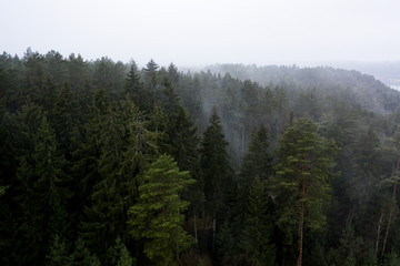Fototapeten Wald Aerial: Beautiful foggy morning above the forest