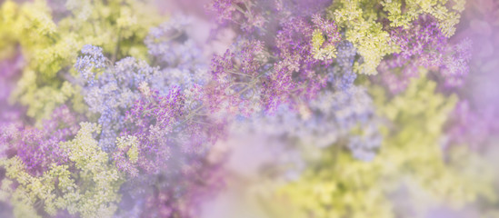 Printed roller blinds Lilac Lilac flowers bloom branch panorama. Greeting gift card background . Toned image. Template banner