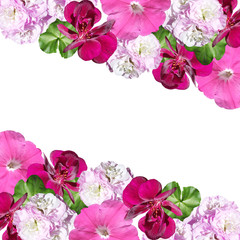Wall Mural - Beautiful floral background of pelargonium and petunia. Isolated