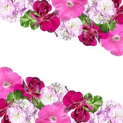 Fototapete - Beautiful floral background of pelargonium and petunia. Isolated