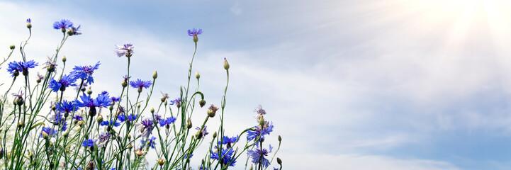 Keuken foto achterwand Lavendel Wild flowers on sunny blue sky, spring meadow