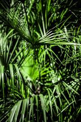 Door stickers Palm tree Jungle