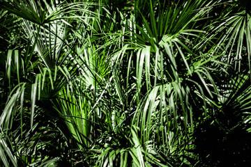 Photo Blinds Palm tree Jungle