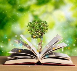 Wall Mural - Open book and green sprout on old wooden table.