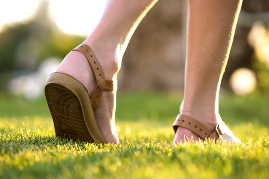 Close up of woman feet in summer sandals shoes walking on spring lawn covered with fresh green grass.