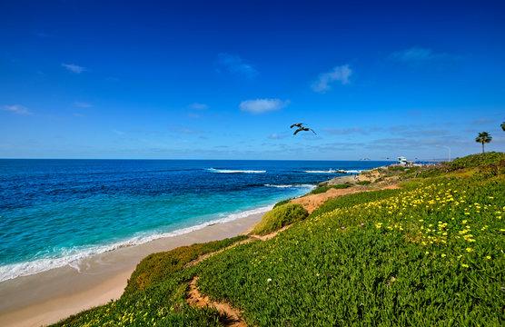 Pelicans fly along the low bluffs of the La Jolla, California coastline