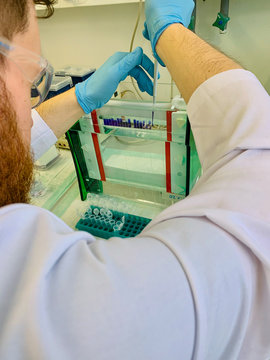 Scientist working with protein samples in the laboratory