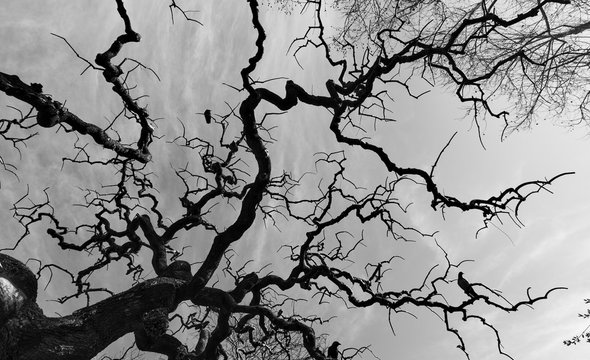 Silhouette of bare tree with fantastical curved branches