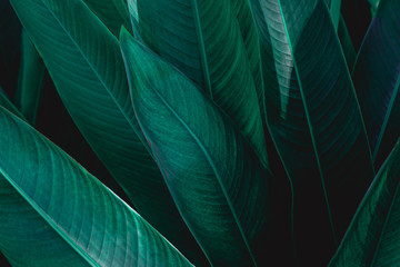 green leaf texture, dark green foliage nature background, tropical leaf