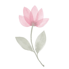 Watercolor twig of a tulip with a leaf. Delicate blossoms flower for spa, relax, holiday. Arrangement perfectly for printing design on invitations, cards, wall art and other. Hand painted.