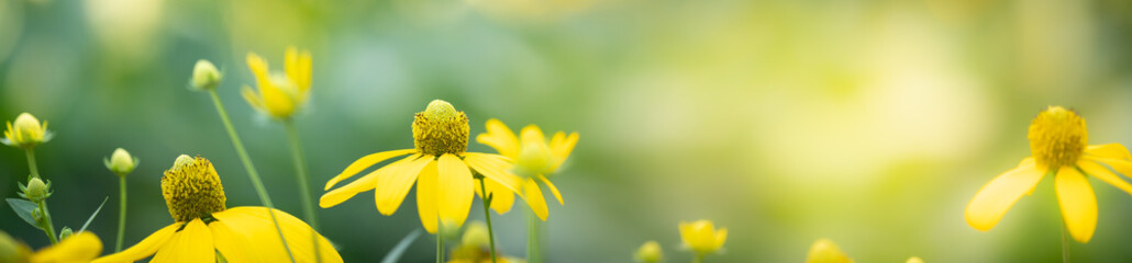 Photo sur Plexiglas Fleuriste Beautiful nature view of flower on blurred background in garden with copy space for text using as summer background natural flower plants landscape, ecology, fresh cover page concept.