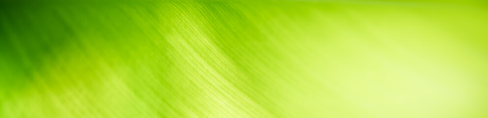 Keuken foto achterwand Lime groen Beautiful nature view of green leaf on blurred greenery background in garden with copy space for text using as summer background natural green plants landscape, ecology, fresh cover page concept.