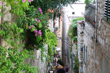 Canvas Prints Narrow alley Plants and gardens in the narrow alley of town Hvar, on island Hvar, Croatia. Selective focus.