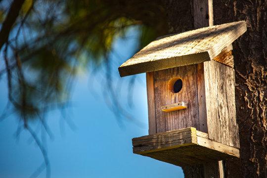 Cute wooden bird house in tree.