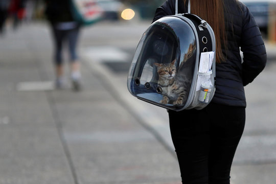 A woman carries her pet cat inside of a backpack as she walks along a street in downtown Washington, U.S.