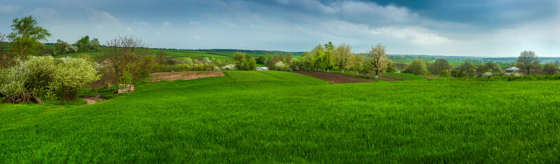 Wall Mural - Spring in the countryside. Green fresh grass, flowering trees in spring, against cloudy sky background.