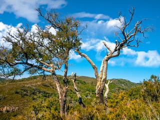 "Cork oak dead by drought in the natural park ""Parque natural de los alcornocales"" in Andalusia, Spain"