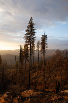 Forest fire at golden hour