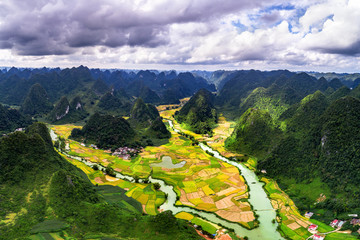 Wall Murals Purple Rice and rice field, harvest rice at Phong Nam village in Trung Khanh, Cao Bang, Vietnam. Landscape of area Trung Khanh, Cao Bang, Vietnam.