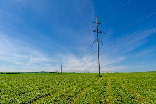summer landscape, sultry summer days,   alfalfa haying, livestock feed