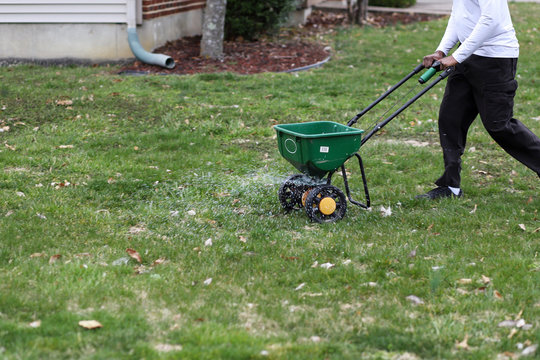 A African-American man using a seed and fertilizer spreader on a front lawn