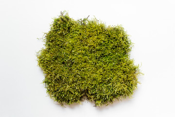 Large piece of green natural forest moss on white background.
