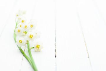 Photo sur Aluminium Muguet de mai Lily of the valley on white wooden