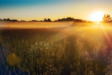 Path in a foggy field with blooming different wildflowers in spring. The sun rising in the fog over...