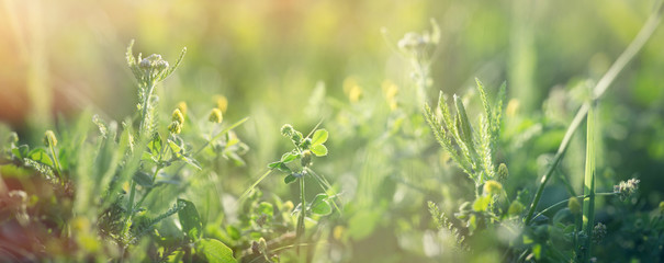Stores à enrouleur Pres, Marais Clover and fresh grass in spring, beautiful nature in meadow