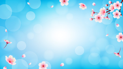 Wall Mural - Spring Cherry blossom with falling petals background vector illustration. Sakura branch on blue bokeh background